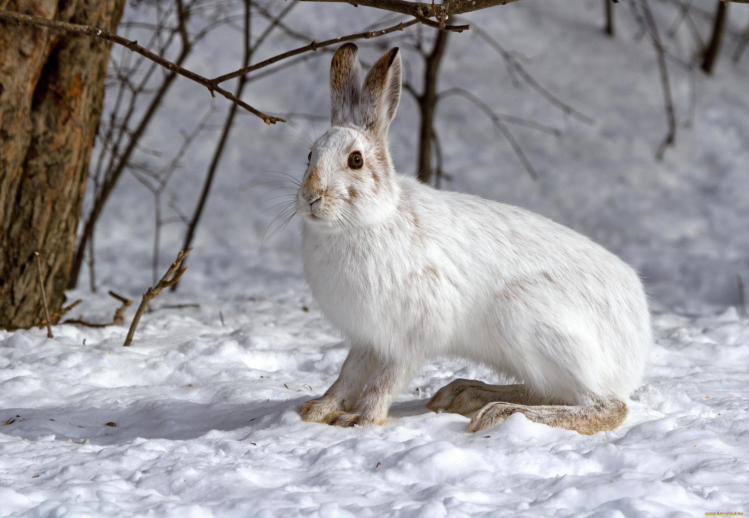 электровозы красивые картинки зайца зимой проем